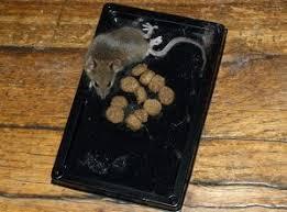 diy and mercial rat traps easy way