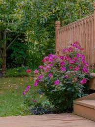 5 Things You Can Do To Make Your Garden More Attractive