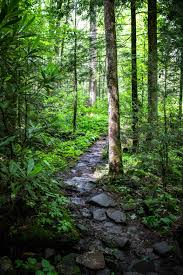 10 More Amazing Hikes In The Smokies Vacation Trips Hiking Mountain Trails