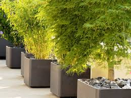 large flower pots for outdoors