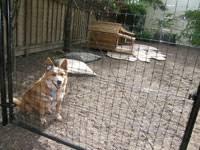 Dog Proof Fence Dog Proof Fencing