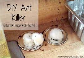 homemade ant how we flourish