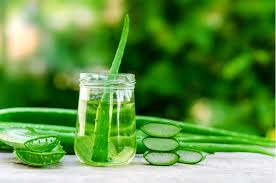 aloe vera for hair and skin care
