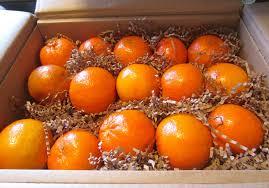 parksdale florida oranges