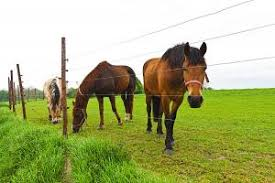 Fencing For Horses Small Farm Sustainability