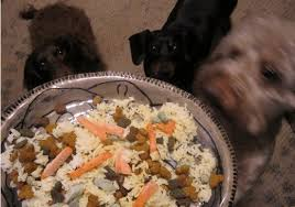 bland t recipes for dogs with upset