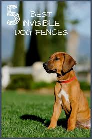 Carlotta Cooper Takes A Look At The 5 Best Invisible Underground Dog Fences Along With Her Picks She Talks About The True Co Dog Fence Invisible Fence Fence