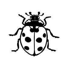 Lady Bug 5 Vinyl Sticker