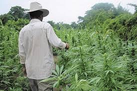 Campesinos podrían recibir licencia del Gobierno Federal para ...