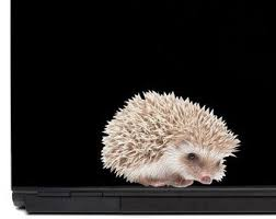 Hedgehog Decal Etsy