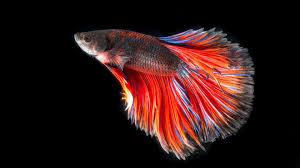 50+ Ultra Hd Aquarium Fish Hd Wallpaper Pics