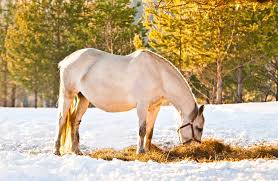 when to change a pregnant mare s t