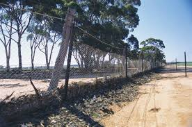 No 1 Rabbit Proof Fence Golden Pipeline