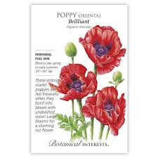 oriental brilliant poppy seeds view