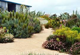 or drought tolerant california plants