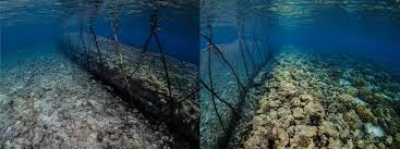 For Artisanal Fishers Fish Fences Are An Easy But Problematic Option