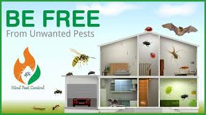 Provide Pest Control Service to Protect your HOME From PESTS like  Cockroach,Bedbug,Termite, Rat,Rodent,Ant,S… in 2020 | Termite control, Pest  control services, Pest control