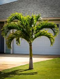 palm trees for