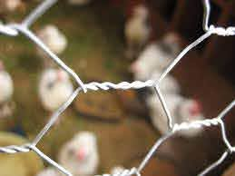 How To Create A Fence With Chicken Wire For Climbing Vines Kingcats Fence Com