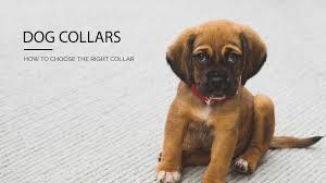 Dog Collars Pet Stop Dog Fence Company