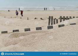 Wooden Fences Buried Under The White Sand Stock Photo Image Of Sand Plant 133388330