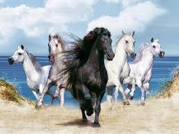 خلفيات خيول صور وخلفيات رائعة ومميزة للخيول ثقف نفسك