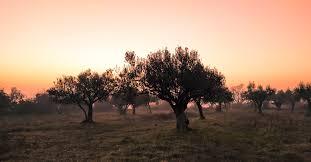 the garden of gethsemane it s