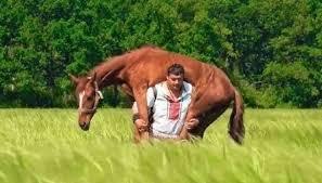 L'uomo più forte del mondo: si carica un cavallo sulle spalle ...