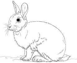 cute bunny rabbit coloring page free