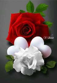 حب وورود