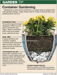 planting in large pots or buckets