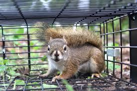 best and worst squirrel traps