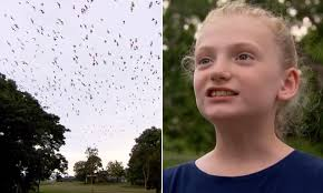 Children too afraid to go to school because their town has been overrun by  sex-mad flying foxes | Daily Mail Online
