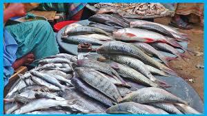 Exclusive Fresh Fish Market Near Me ...