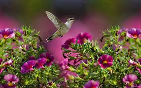 صور طبيعية جميلة و خلفيات مناظر ساحرة الجمال