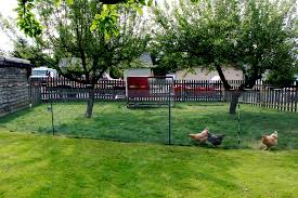 Vegetable Garden Fence Chicken Wire Apartments