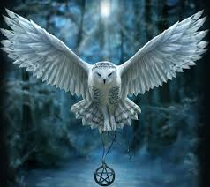 harry potter owl wallpapers top free