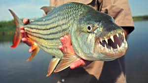 Top 10 Most Dangerous Fish of the World ...