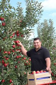 Picture result for Geiger's Apple Land Stockheim