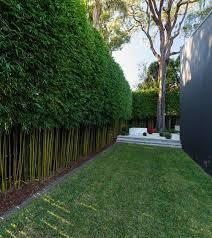 12 Garden Hedge Plants For Privacy Matchness Com Garden Hedges Privacy Landscaping Bamboo Garden Fences