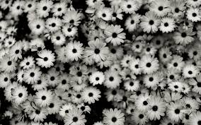 50 hd and qhd beautiful black and white