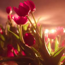 خلفيات شاشه جميله اجدد خلفيات الهواتف بجوده عاليه صباح الورد