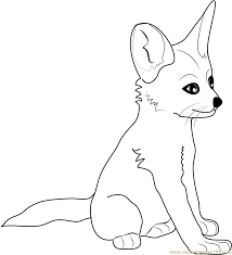 fennec fox baby coloring page free