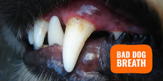 understand and treat bad dog breath