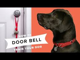 how to door bell train your dog you