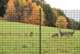 Keep The Deer Looking In Not Out With Garden Zone Deer Fence Gardentips Gardenzone Chickenwire Gardeni Autumn Garden Deer Fence Garden Fencing