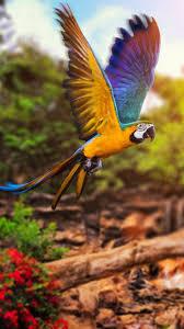 macaw wallpapers hd 98j4u4f