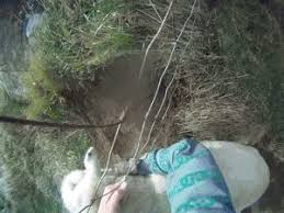 Rescuing A Sheep From A Fence Gif On Imgur