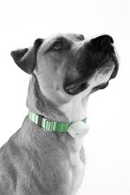 Electric Dog Fence Collar Protective Skins Perimeter Pet Fence