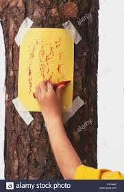 Bark Rubbing High Resolution Stock Photography and Images - Alamy